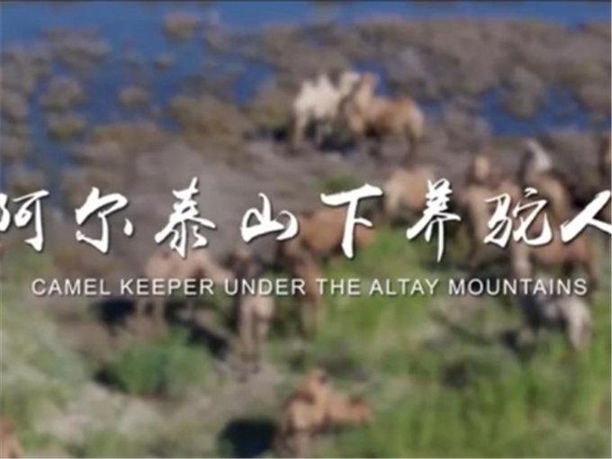 阿尔泰山下养驼人