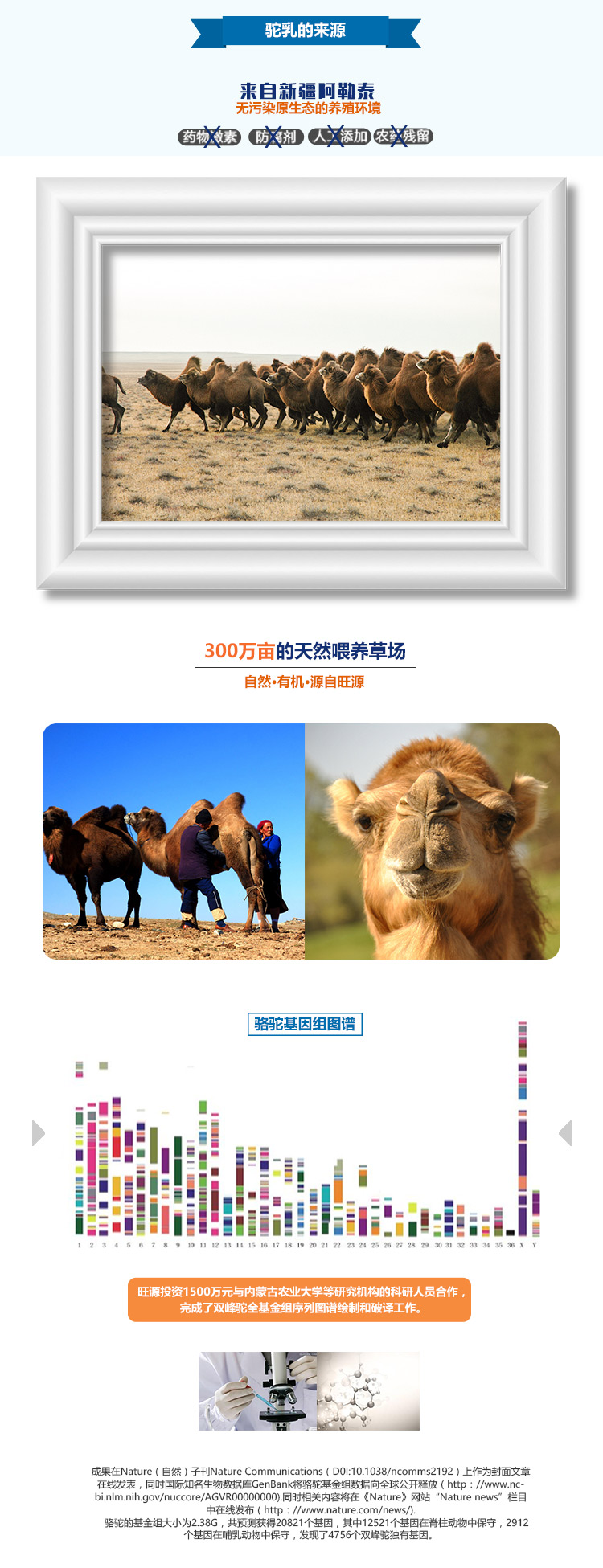 旺源骆驼奶片 80片/瓶 1克/片