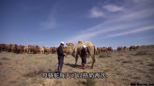 骆驼奶对人体更多好处正在被
