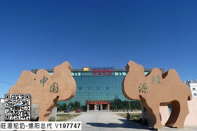 阿勒泰新闻网丨福海县:骆驼产业,助力贫困牧民走向美好生活