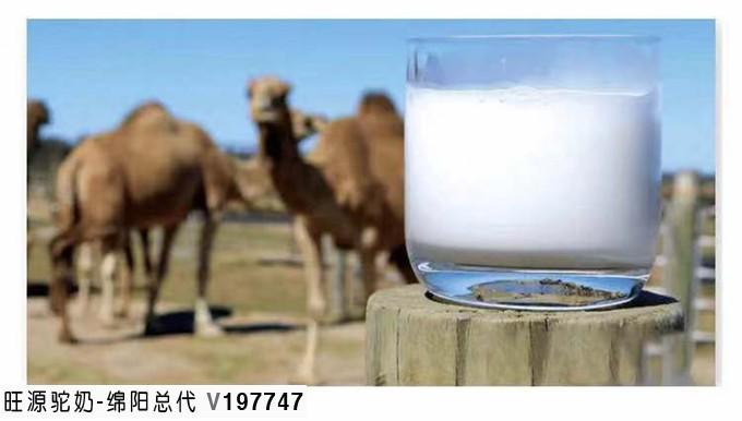 骆驼乳对肠胃炎的治疗作用
