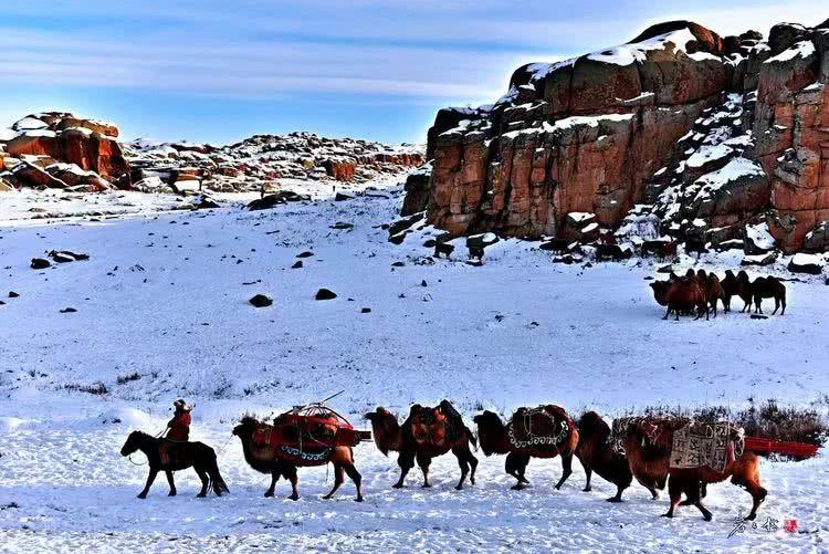 我国双峰骆驼的数量