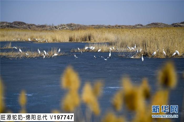 到新疆旅游不得不去的地方----春天里的乌伦古湖