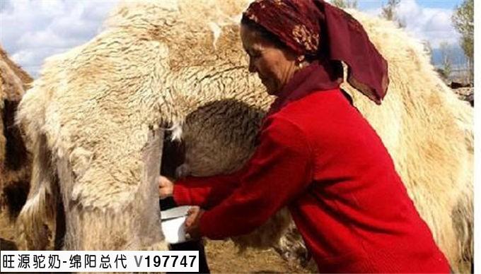 我妈妈是结肠癌,已有腹水,可以喝骆驼奶吗?