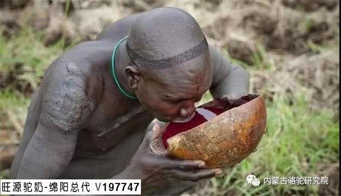 非洲古怪部落,抽出骆驼血液饮用而不杀死它,待伤口愈合再次取血