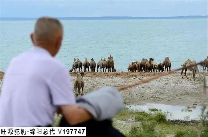 旺源集团董事长陈钢粮获评新疆维吾尔自治区第十一批有突出贡献优秀专家