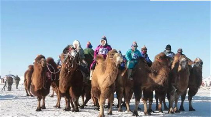 旺源骆驼奶绵阳总代理为您提供:中新社丨通讯:新疆哈萨克族牧民的骆驼生意经