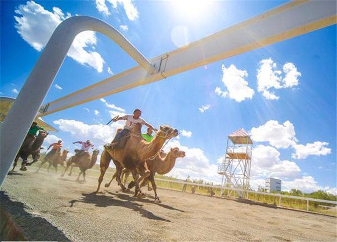 旺源骆驼奶绵阳总代理为您提供:从交通工具到浑身是宝新疆骆驼走上产业发展之路