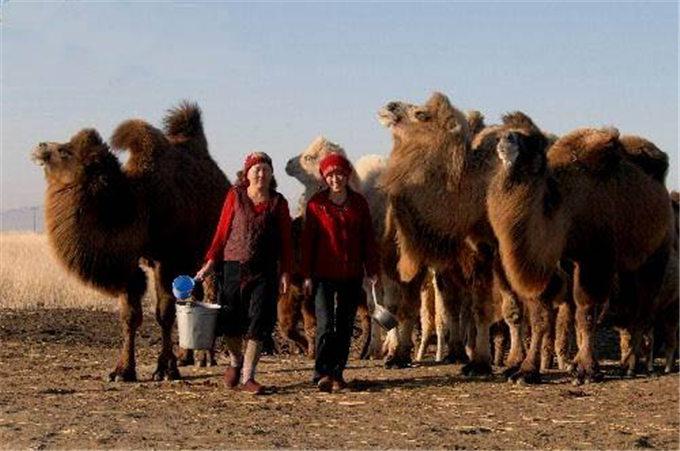 旺源骆驼奶绵阳总代理为您提供:骆驼奶功效的最新研究成果