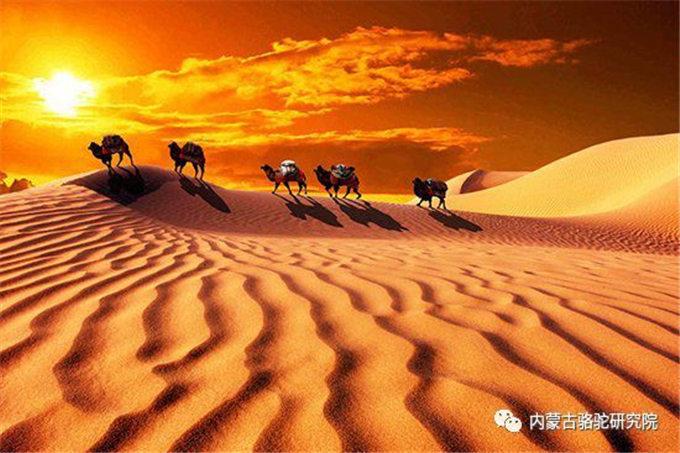 旺源骆驼奶绵阳总代理为您提供:骆驼血的研究进展
