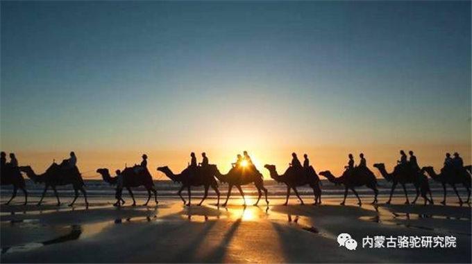 旺源骆驼奶绵阳总代理为您提供:新疆日报丨骆驼产业圆了福海群众脱贫梦
