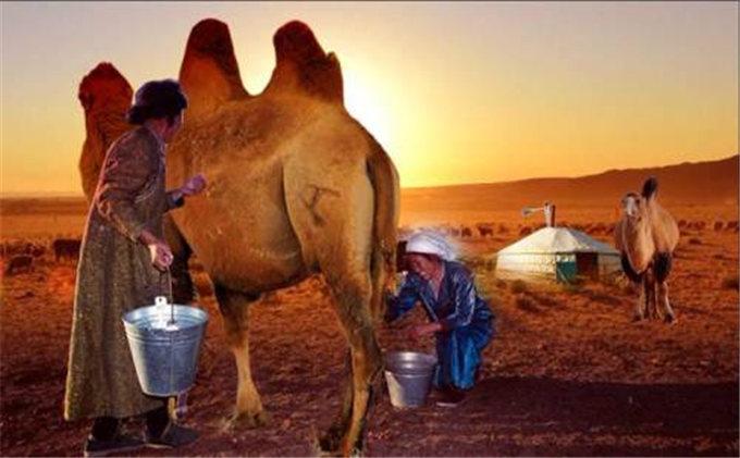 旺源骆驼奶绵阳总代理为您提供:上班族午后喝鲜驼奶防辐射,还不用担心发胖!