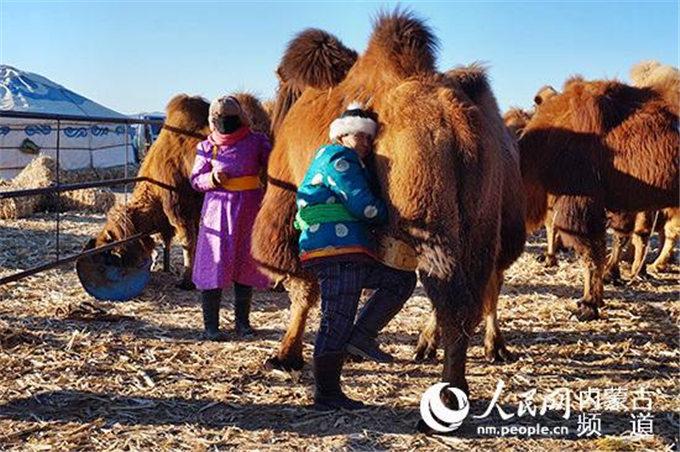 旺源骆驼奶绵阳总代理为您提供:亚心网丨旺源生物科技集团党支部:骆驼产业托起边疆牧民致富梦