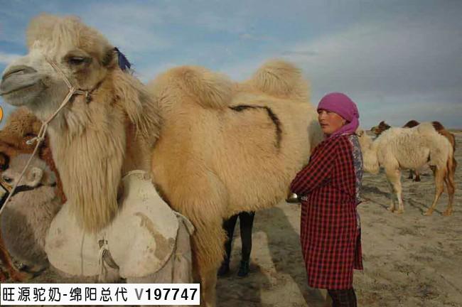 纯正有机骆驼奶的价
