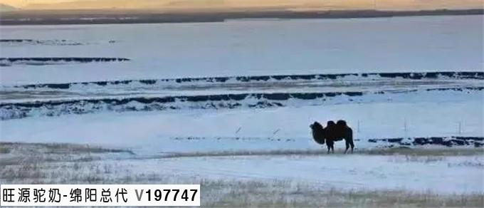 旺源骆驼奶绵阳总代理为您提供:骆驼乳对肠胃炎的治疗作用